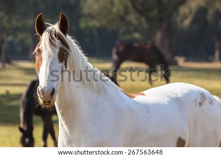 Horse Blue Eye Animal\ Horse blue eyes white brown closeup of equestrian animal.