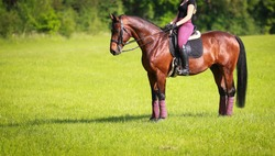 Horse brown with rider stands on a green meadow in a careful stop