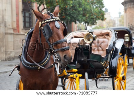 Horse carriage in Seville, Spain.