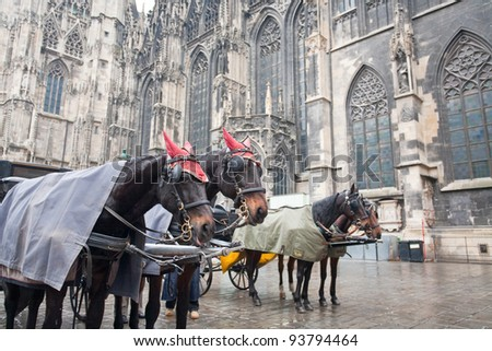 horse carriage near St. Stephan Cathedral, Vienna, Austria