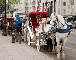 Horse carriages waiting for customers at the central park in New York City