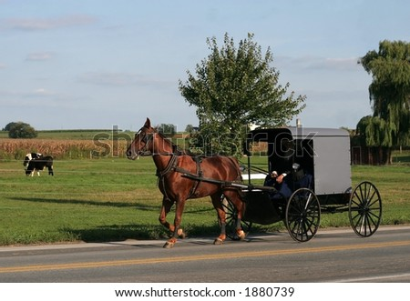 horse carrying carriage