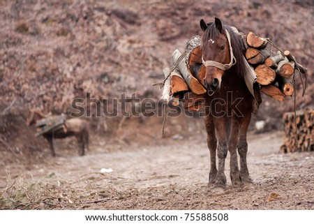 Horse carrying pile of wood on his back