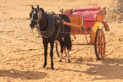 Horse chariot in desert