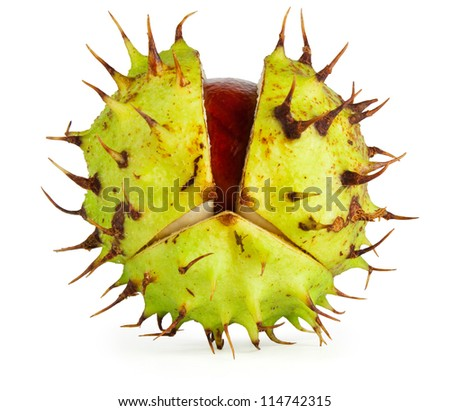 Horse chestnut conker in husk with gentle shadow. Isolated on white with clipping path.