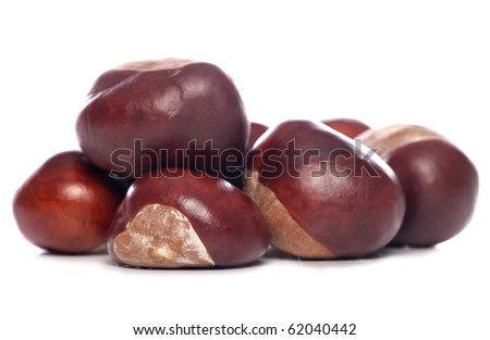 horse-chestnut conkers isolated studio cutout
