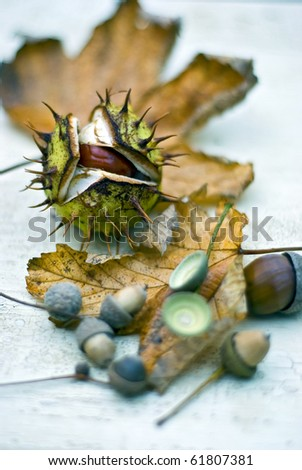 Horse-chestnuts (conkers) on textured ground - Autumn (Fall) still-life. Differential focus