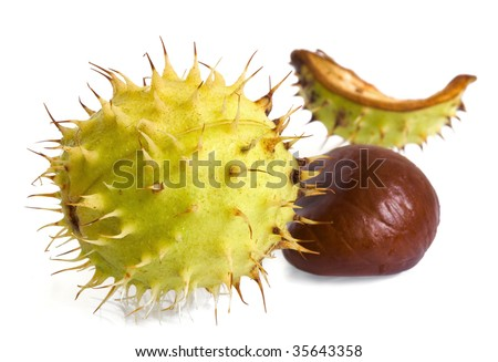 Horse Chestnuts isolated on white