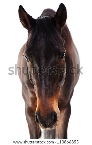 horse, close-up, full face head bay horse