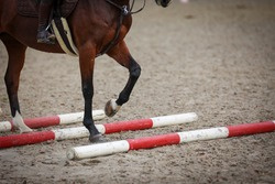 Horse close-up of legs when crossing trot bars.