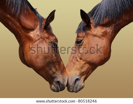 Horse couple in love