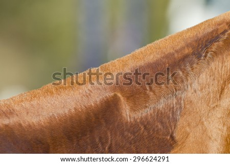 Horse Detail\ Horse pony grooming neck body cover closeup abstract animal detail.