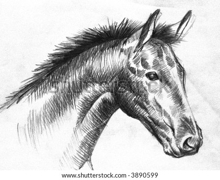 horse drawings in pencil. stock photo : horse drawing