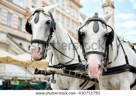 Horse-drawn carriage (Fiacre) waiting for a tourists in the old city in Vienna, Austria #430751785