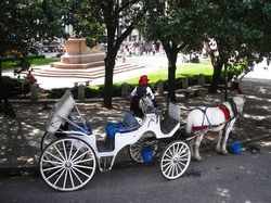 Horse-drawn carriage in Central Park.