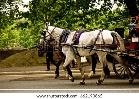 Horse Drawn Carriage / Main tourist attraction of tours of Central Park in New York. Transporting people while providing historical information of the largest urban park. #662190865