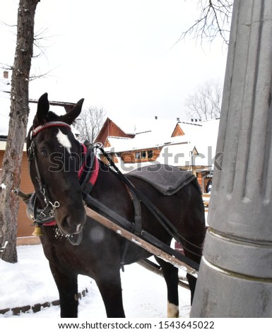 horse drawn horse on a winter snowy street #1543645022