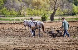 Horse-drawn sowing tools working. Farmers with horse-drawn drill working the field. Horse-drawn seed drill at work.