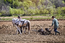 Horse-drawn tools at work. Farmers with horse-drawn drill working the field. Farmers with horse-drawn seed drill.