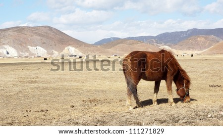 horse eating in pastoral zone in western china with the cloud sky in shangri-la