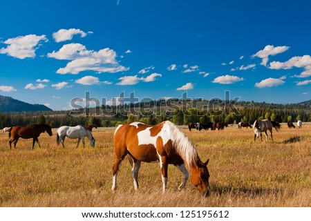 Horse enjoys in Yellowstone National Park, USA