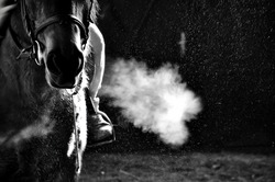 horse exhale