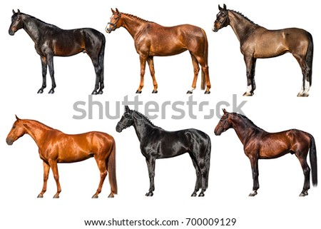 Horse exterior isolated on white. Collection on white background