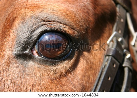 horse eye and bridle