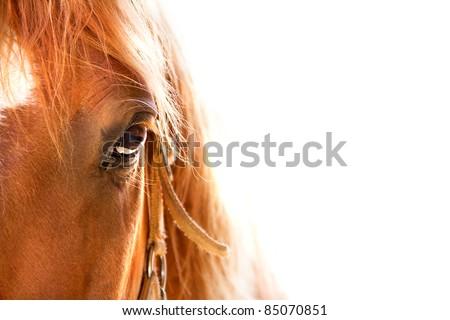 Horse eye close up in high key