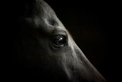 horse eye closeup on dark background