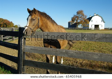 Horse Farm: A brown and white horse poses at the fence on a Virginia farm.