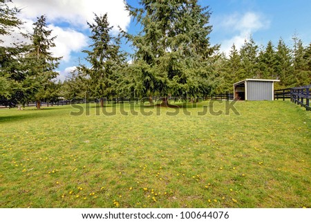 Horse farm pasture with small grey shed and fir trees.