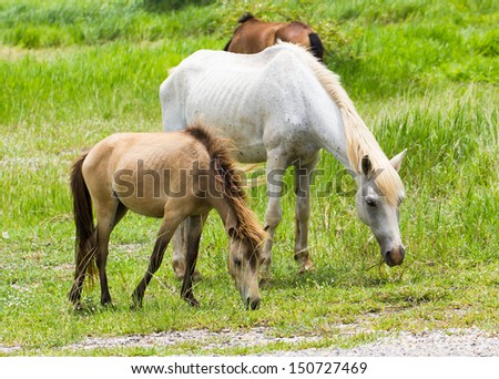Horse feeding in a field in the sunlight - stock photo