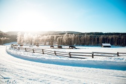 Horse fence in the winter
