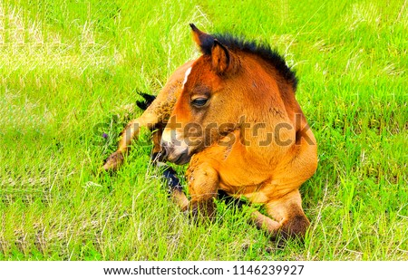 Horse foal lying on green grass. Horse colt in nature. Cute horse foal view
