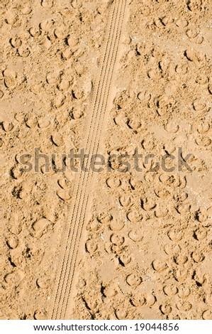 horse footprints - stock photo