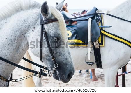 Horse for rent Hua Hin beach Prachuab Khirikhan,Thailand #740528920