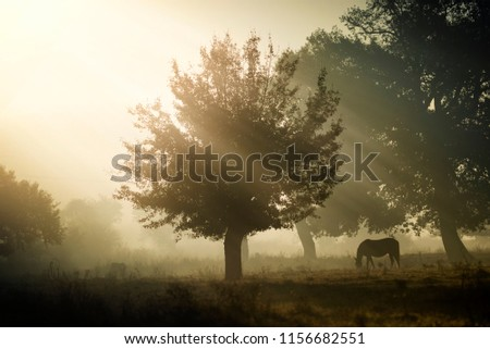 Horse freezing in an autumn field,  landscapes from Bulgaria, livestock animals, domestic animals #1156682551