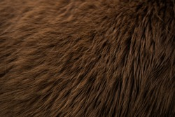 horse fur texture, animal skin texture close up, animal hair, brown fell, background