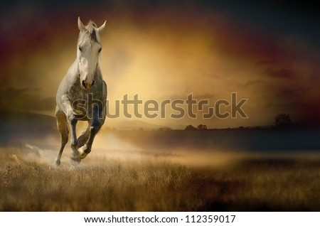 Horse galloping through sunset valley