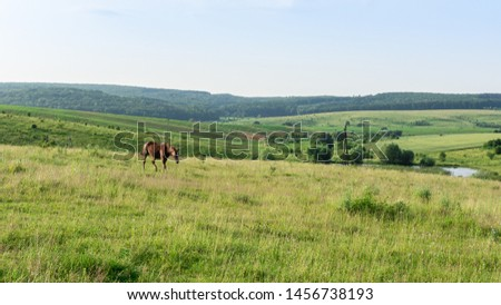 Horse graze in the meadow, fields and meadows, landscape #1456738193