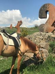 Horse grazes on grass at Alphabet Monument in Armenia