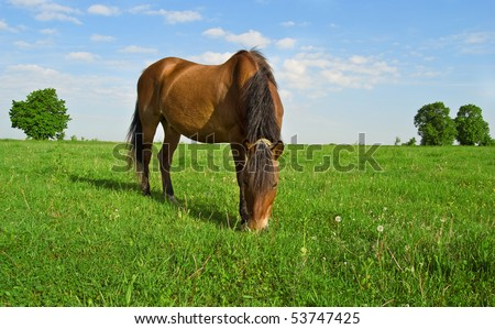 horse grazes on the field on a background sky