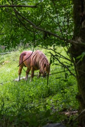 Horse grazing in a mountain field in the Catalan Pyrenees
