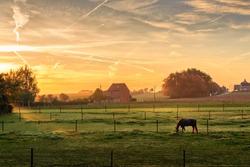 Horse grazing on a foggy morning at sunrise in orange sunbeams in rural landscape. Peaceful scene. Kortanaken (near Diest), Flanders, Belgium, Europe