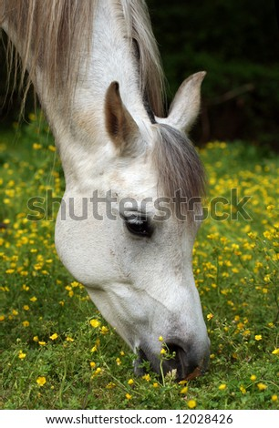 Horse grazing on spring pasture