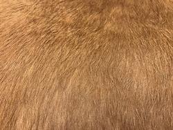 Horse hair texture
