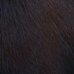 horse hairy texture background, wild animal fur background