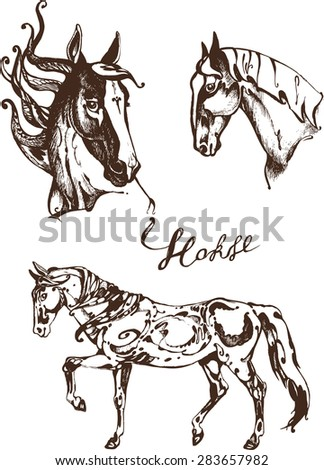 Horse. Hand draw animal illustration.