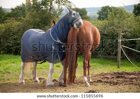Horse having a scratch on his companion